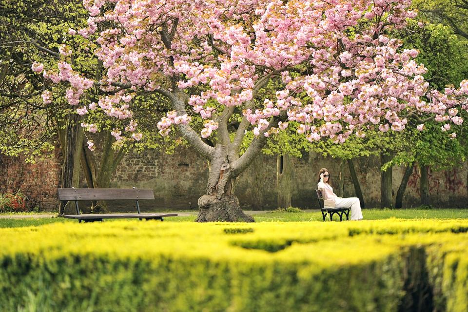 różowe-drzewo-sesja