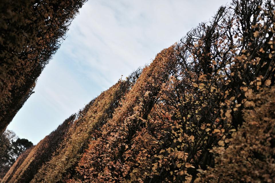 park-oliwski-jesienia